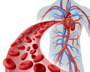 Blood heart circulation health symbol with red cells flowing through three dimensional veins from the human circulatory system representing a medical health care icon of cardiology and cardiovascular fitness on a white background.